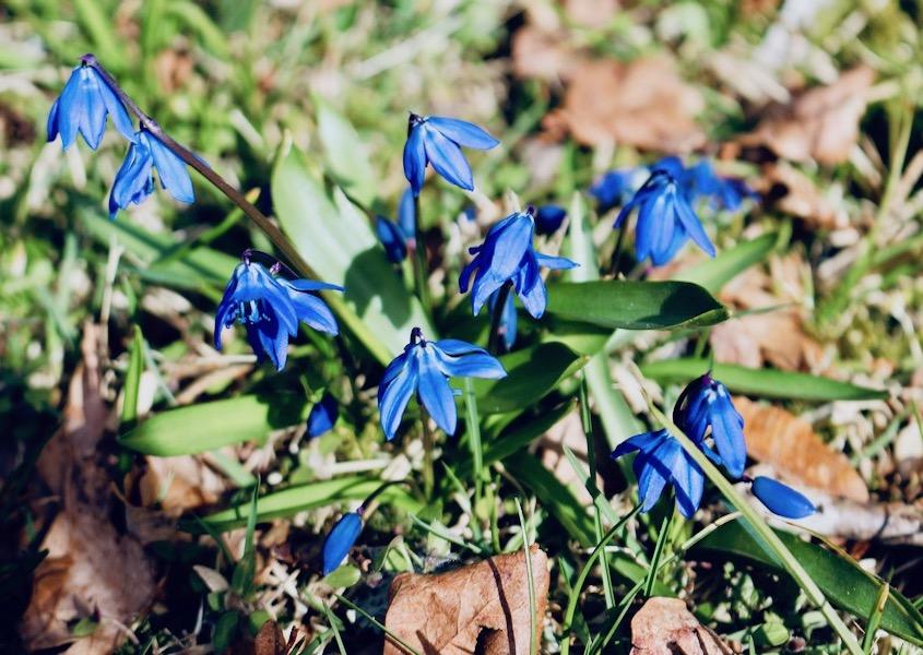 Blomster hjemme i haven