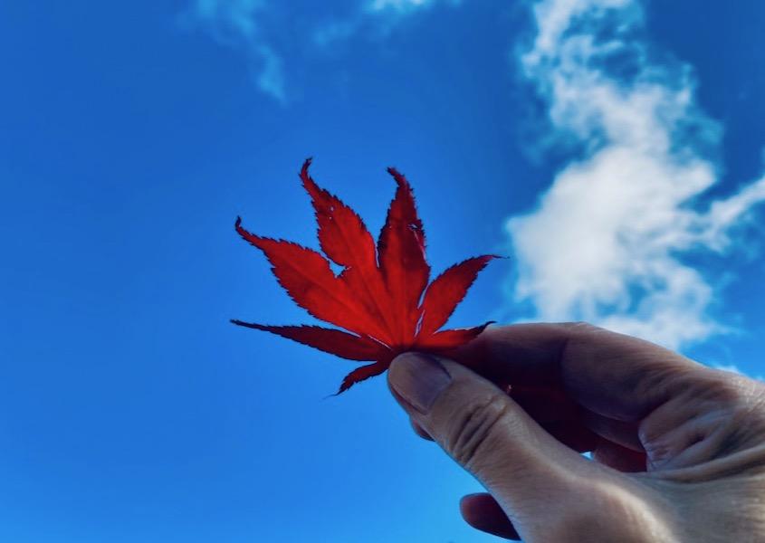 November farver