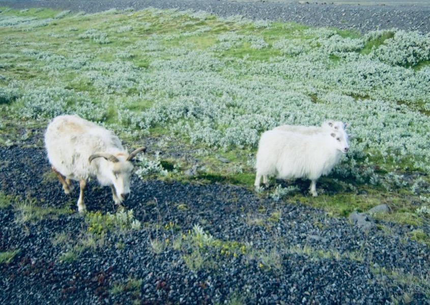 Ulden i Island